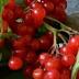 Gilaburu meyvesinin faydaları