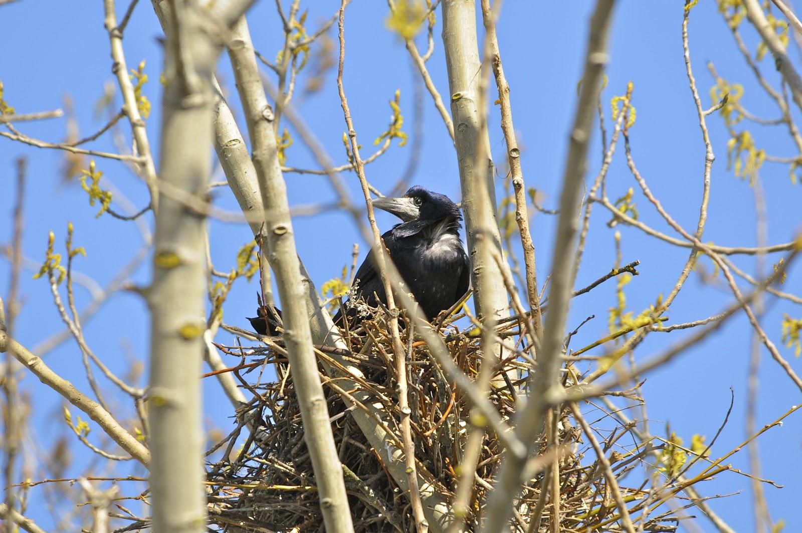 El nido del xuan
