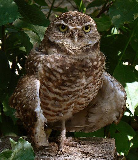 BARRY the BIRDER: List of endangered bird species in Canada