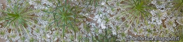 giorni fiore foglia radice frutto calendario lunare 2019 la luna nella fattoria didattica dell ortica a Savigno Valsamoggia Bologna in Appennino vicino Zocca