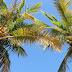 [Beautytipp] Wundermittel Kokosöl