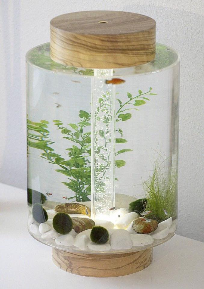 Ornamental fish aquarium for your home decoration decor for Aquarium for home decoration