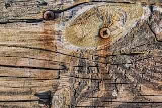 Стойкость древесины к гниению