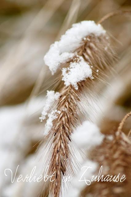 Makrofoto Pampasgras mit Schnee