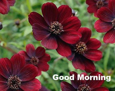 good morning chocolate cosmos images download