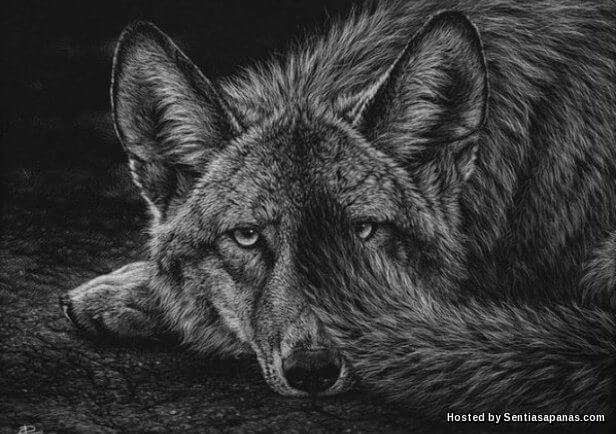 Serigala Nabi Yusuf.jpg