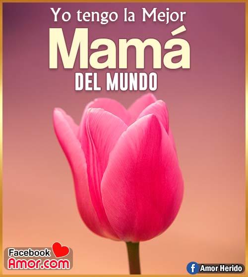 flor tulipán para mamá con mensaje