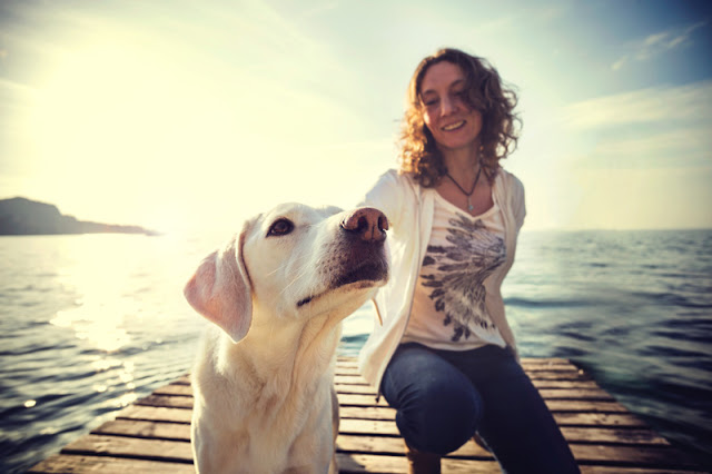 A woman pays attention to her Labrador dog's body language