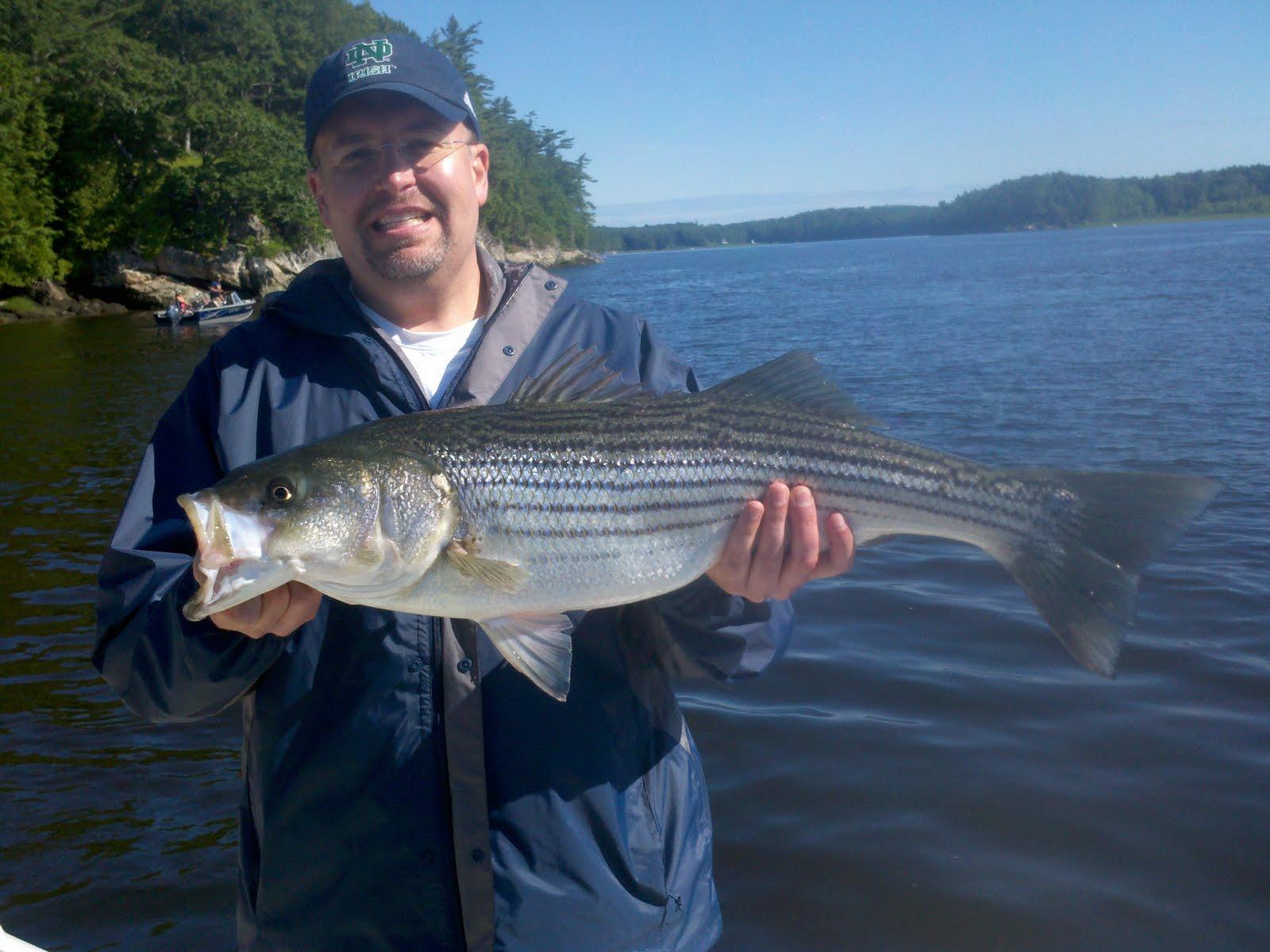 Maine Striper Fishing Charters & Reports Hotline 207-691 ...