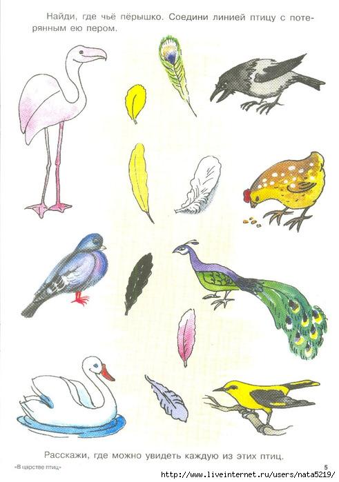 Птицей знакомство дидактические скворец с игры