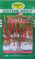 cabe,cabe hai lux,benih cabe,cabe keriting, cabe merah,petani,eston seed,lmga agro