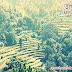 उत्तराखंड की जानकारी इतिहास हिंदी में - Information of Uttarakhand History In Hindi