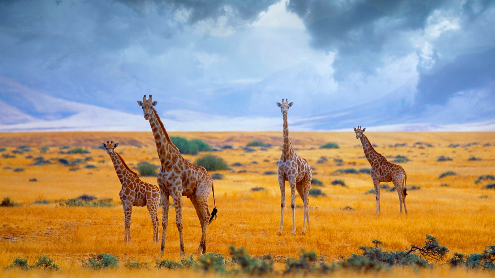 the science of tropical savannas essay Science biology chemistry health  in africa, they are known as savannas,  there are two basic types of grassland: tropical and temperate.