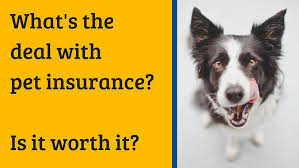 How To Get The Best Pet Insurance Deal
