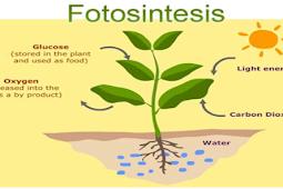 Pengertian Fotosintesis, Fungsi, Proses, Tahapan dan Faktor Yang Mempengaruhi Fotosintesis Lengkap