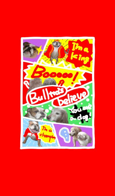@pet graud prix bulltta's believe
