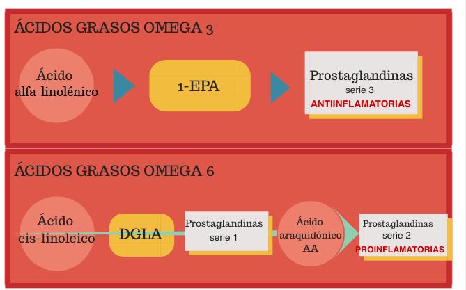 alimentos ricos en omega 3 y 6