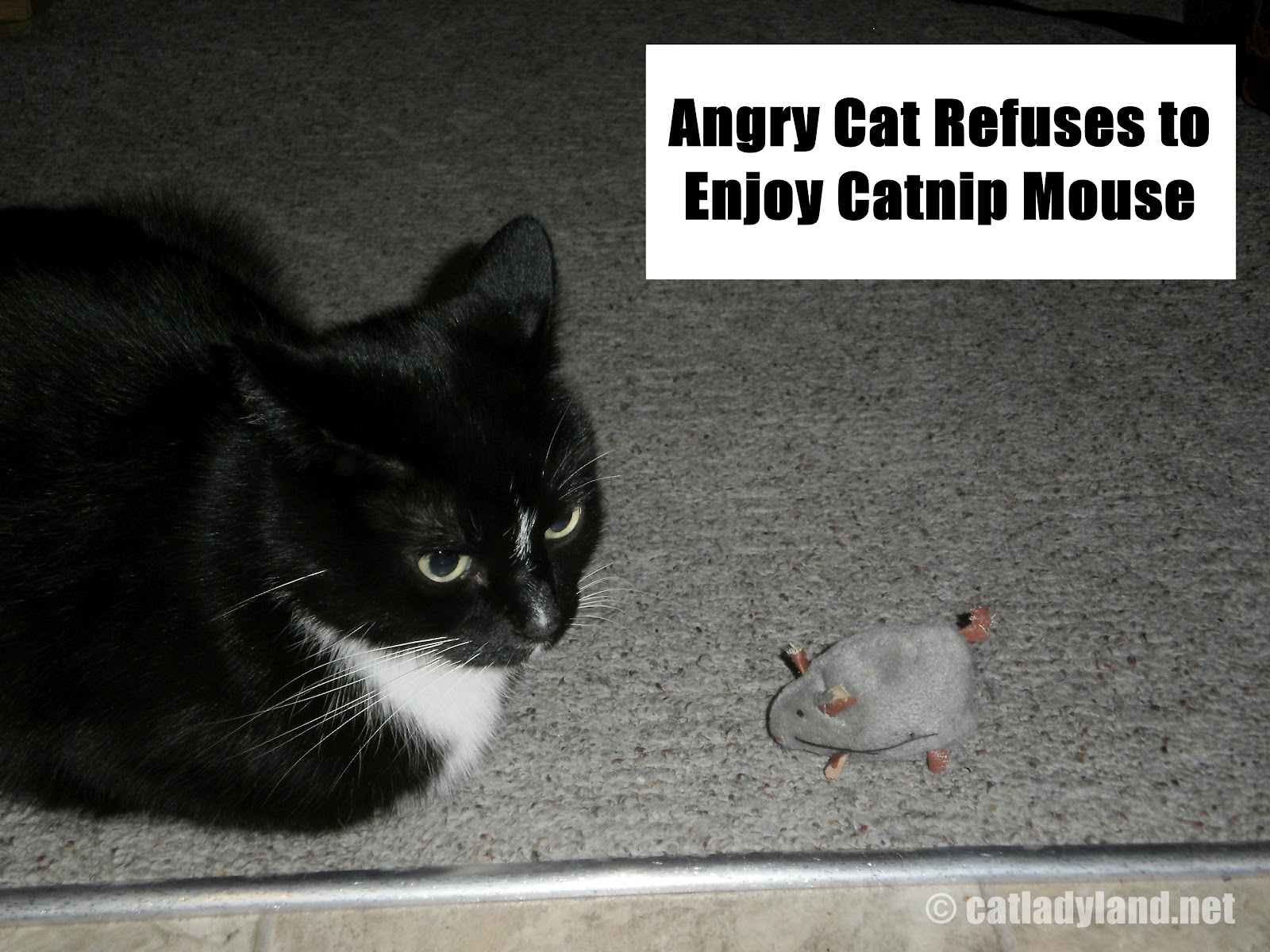 Cat And Mouse Quotes: Funny Cat And Mouse Picture