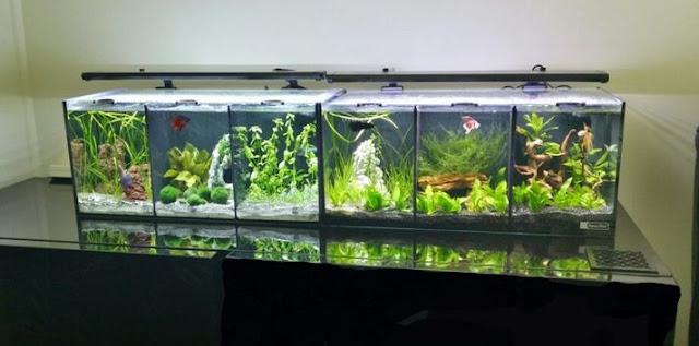Aquascape Mini Untuk Ikan Cupang
