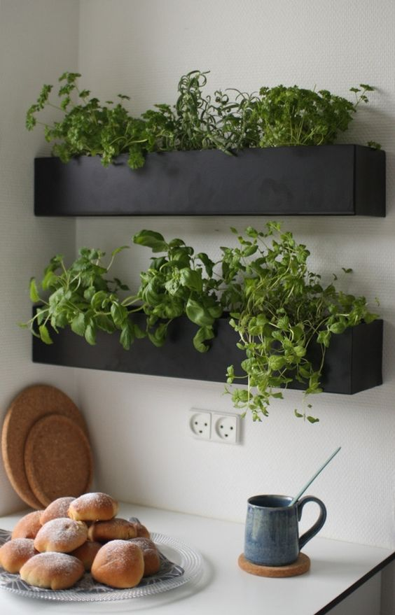 Ecomerge why not grow it yourself small kitchen herb garden pc apartment therapy solutioingenieria Choice Image