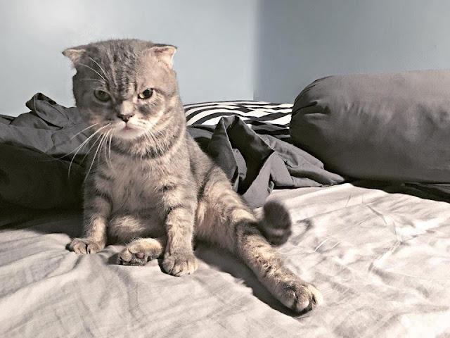 Chú mèo đã béo mặt mũi tính nết lại còn khó chịu