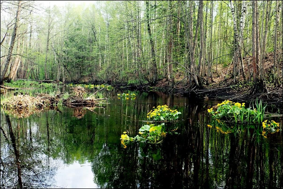 Помет лесных животных фото теперь