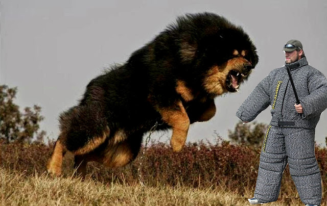 top 10 ferocious dog breeds