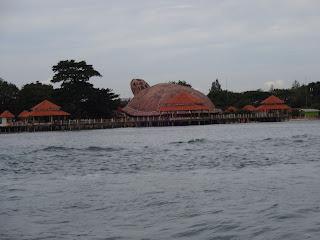 Tampak kura-kura pantai kartini di perjalanan pulang dari pulau panjang