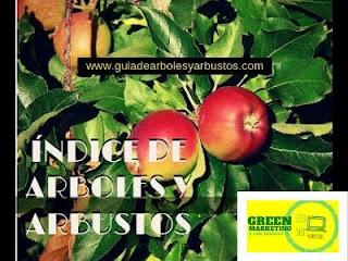 Arboles Arbustos, plataforma de contenidos de ECO SEO Green Marketing