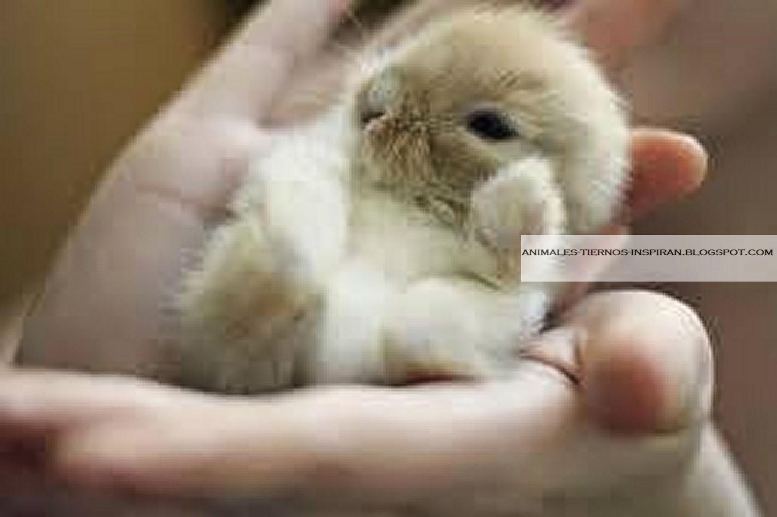Animales Tiernos Inspiran: Imágenes De Animales Bebes