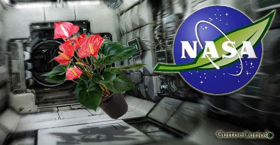 8 plantas que a Nasa recomenda para purificar o ar da sua casa