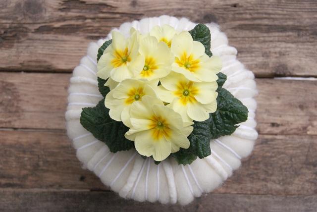 DIY Primel mit Manschette aus weißer Filzwolle
