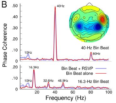 図:バイノウラルビートの周波数別エントレインメント効果