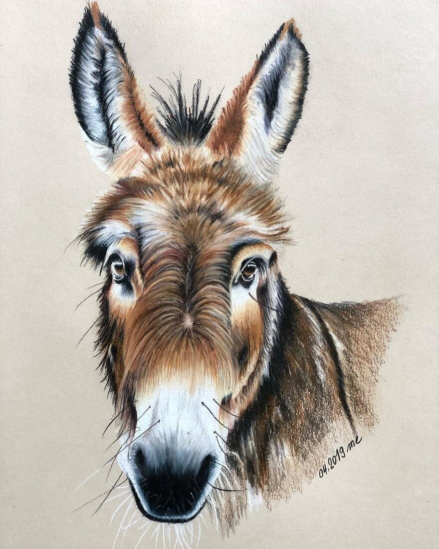 09-Donkey-Eichenberger-Rodriguez-Colored-Wildlife-Drawings-www-designstack-co