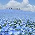 Khám phá những cảnh đẹp mê hồn ở Nhật Bản