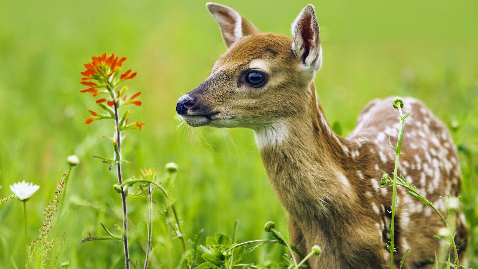 Animals HD Wallpapers For Pc Free Download