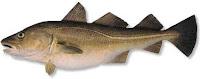 El bacalao, una especie en extinción
