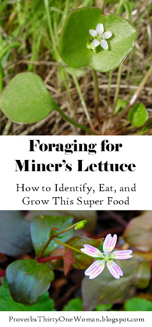 How to Identify, Eat, and Grow this Super Food