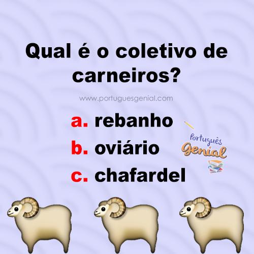 Coletivo de carneiros - Qual é o coletivo de carneiros?