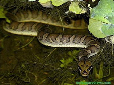 Habitat ular - berbagaireviews.com