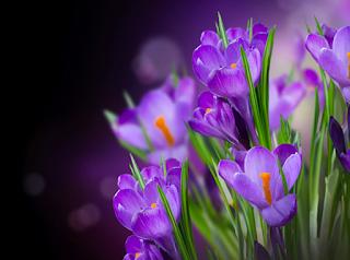 Resultado de imagem para flores lilas