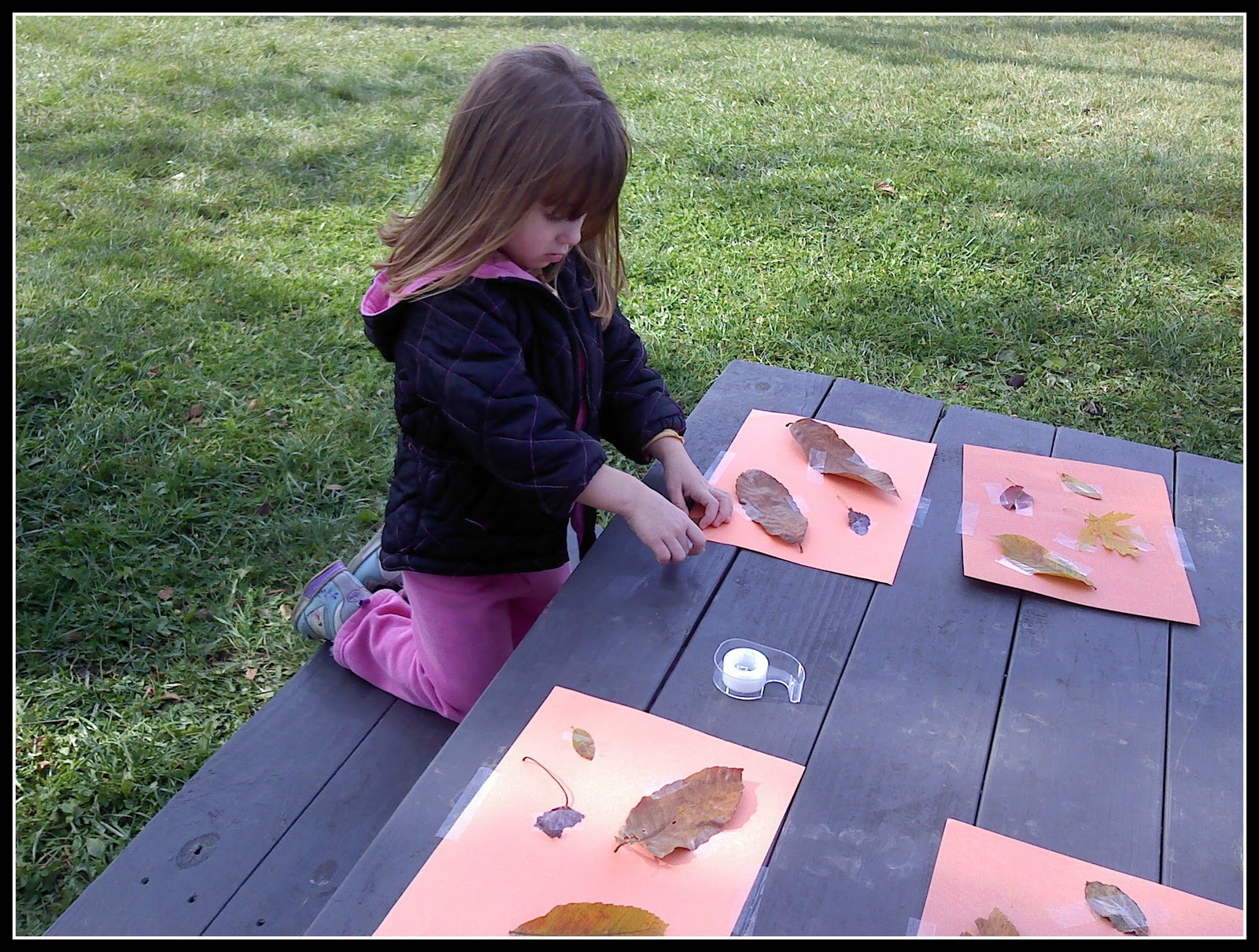 The Walnut Acre Chronicles Fun Fall Activities