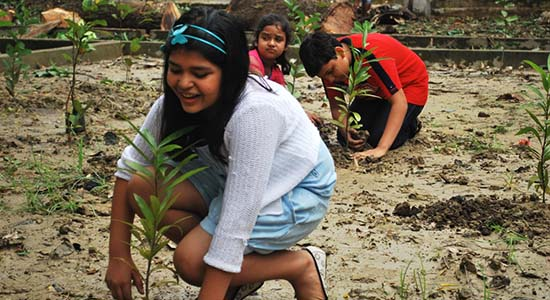 Sustainable Greening Planting