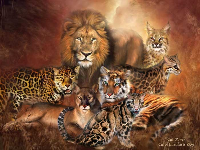 Digital Leopard Art Wallpapers: White Wolf : Carol Cavalaris