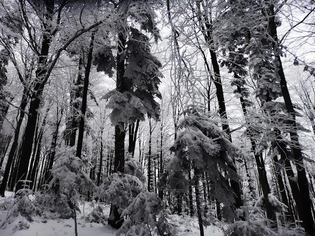 Podejście na Śnieżnicę (leśny odcinek).