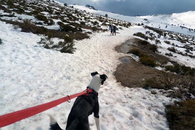 Espagne-Sierra-Guadarrama-louveteaux-moon-neige