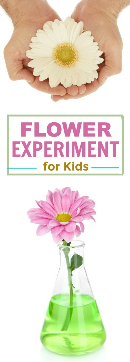 FLOWER EXPERIMENT FOR KIDS.  Perfect for Spring.