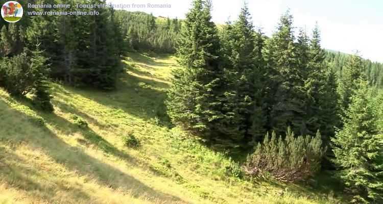 La munte pe Retezat, Poiana Pelegii