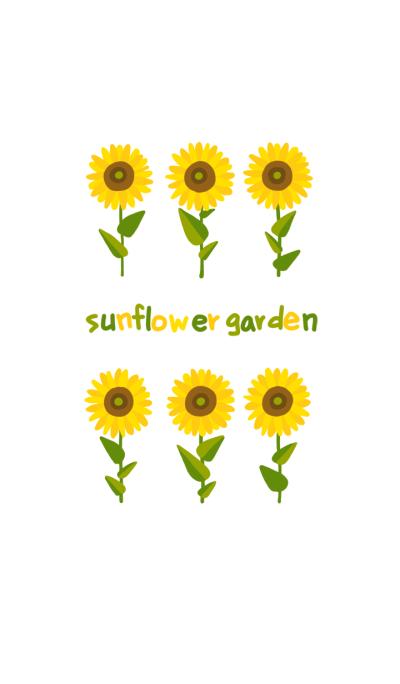 sunflower garden!