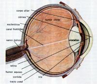 iridologia-vetarq-veterinaria-pdf-apostilas-livros-baixar